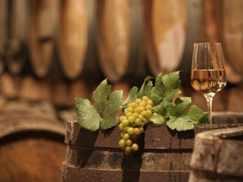 Freehold Vineyard ,Land & Accommodation Business for Sale #3193