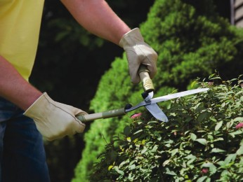 Brisbane Commercial Garden/Body Corporate Maintenance Business For Sale Ref #3563